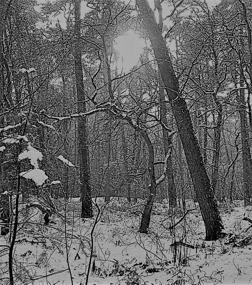 wp sneeuw
