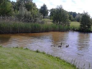 golf zwaantjes