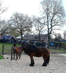 boerenpaarden