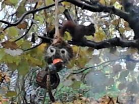 eekhoorn met gezicht