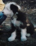 hond b