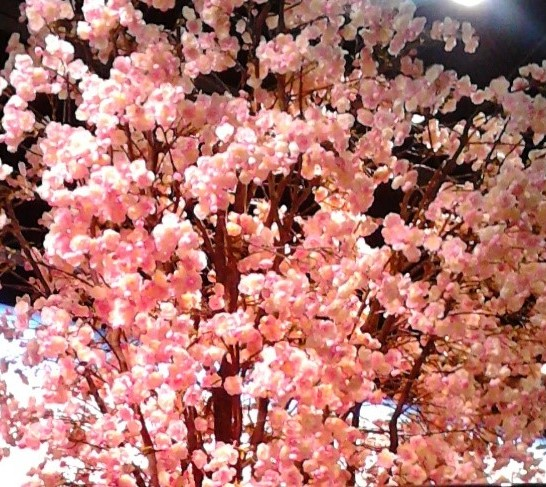 japanse bloesem