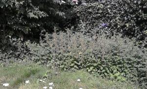 plantsoen2