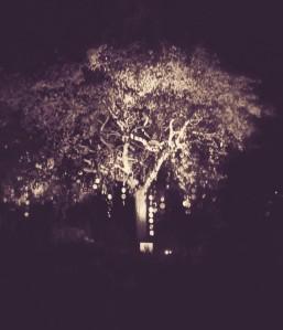 herfst en licht