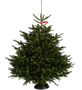 kerstboom-nordman