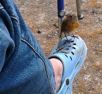 roodborstje op schoen