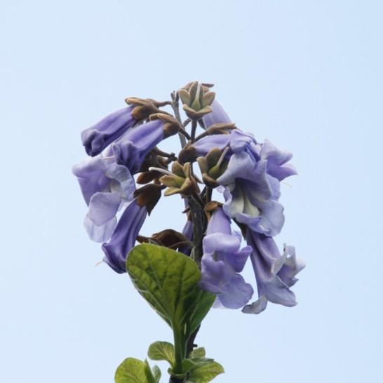 anna bloem