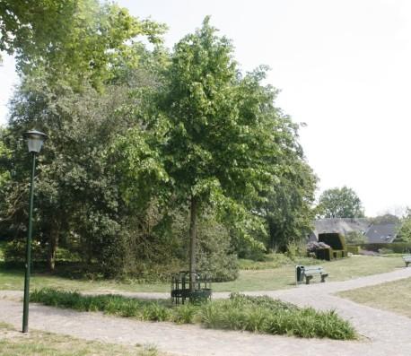 kroningsboom