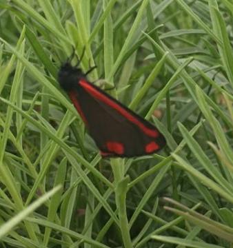 st.jacobsvlinder