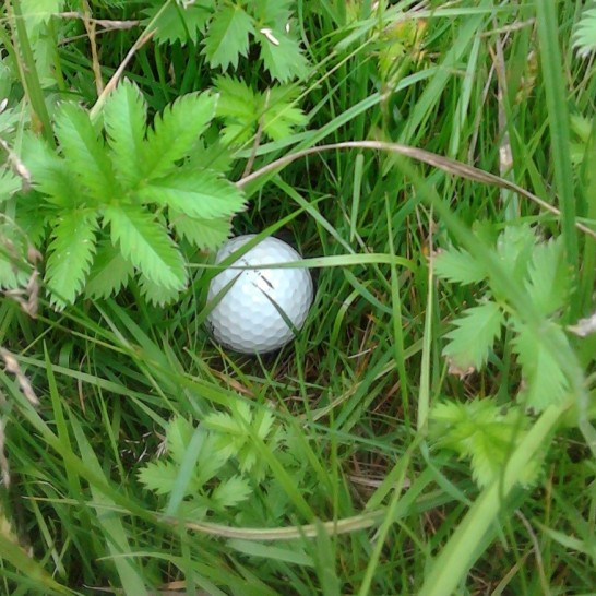 golfbal in gras
