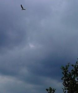 vogel in lucht